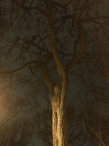 TreeLover_IMG_1470