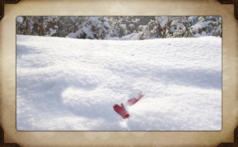 Newly fallen snow, in a backyard garden.